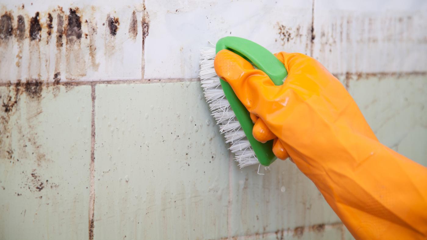 Sikker metode til fjernelse af skimmelsvamp
