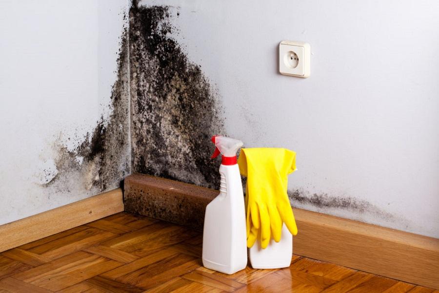 Professionelle råd til håndtering af skimmelsvamp